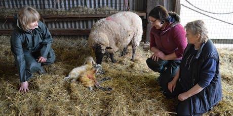 Cyrsiau Wyna | Lambing Day Courses  tickets