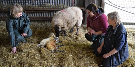 Cyrsiau Wyna | Lambing Day Courses  tickets