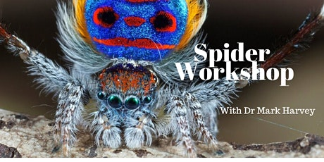 Spider Workshop tickets