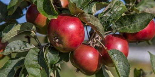 Summer Pruning of Apple Trees