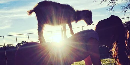 Goat Yoga in the Country with Mimosas or Sangria's!!!