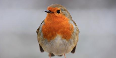 New Year's Day Bird Walk - Smestow Valley, Wolverhampton tickets