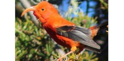 Maui Birding (2020-03-19 starts at 7:30 AM)