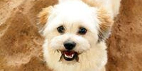 Puppy Recall Workshop - Learning To Let Your Pup Run Free But Stay Safe tickets
