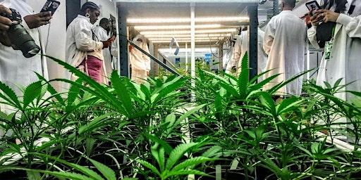 Cannabis Grow and Lounge Tour