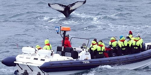 Whale Watching: RIB Express from Reykjavik
