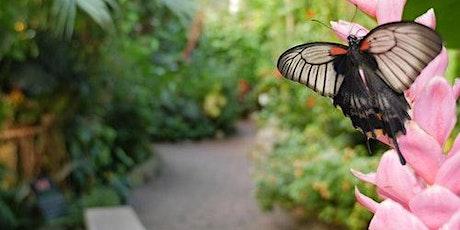Victoria Butterfly Gardens billets