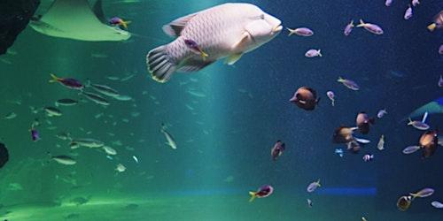 Aqua Planet 63