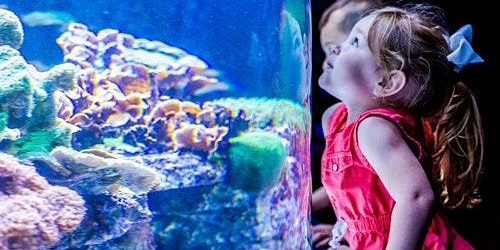 Ripley's Aquarium of Myrtle Beach: Skip The Line