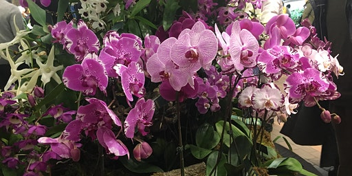 2020 SOOS Valentine's Orchid Show and Sale