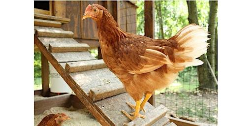 Backyard Chicken Training Class - Seminole County