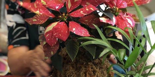 Christmas Kokedama Workshop