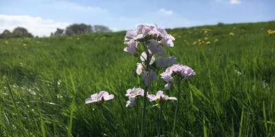 Worcestershire Spring Wild Food Foraging Course/Walk