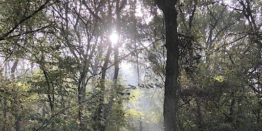 Buckinghamshire Spring Wild Food Foraging Course/Walk