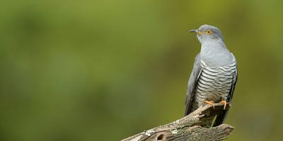 RSPB Cuckoo Experience Guided Walk