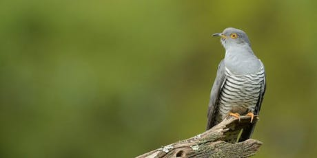 RSPB Cuckoo Experience Guided Walk tickets