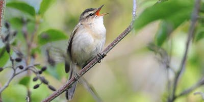 RSPB Morning Birdsong Guided Walk