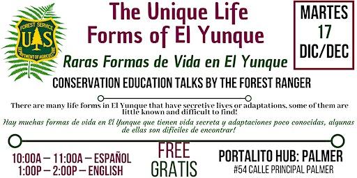 El Yunque Unique Life forms / Raras Formas de Vida en El Yunque