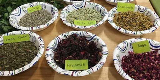 Herbalism Camp for Ages 9-12