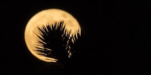 Photographing Joshua Tree By Moonlight