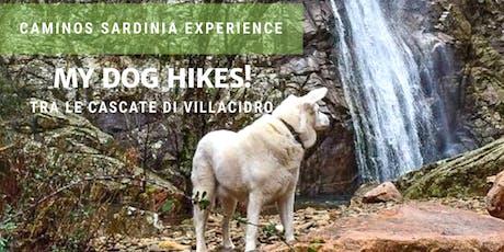 Dog hiking: passeggiata a sei zampe alle cascate di Villacidro! biglietti