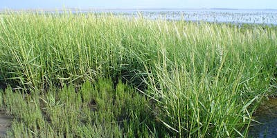 Invasive Plants and Their Management