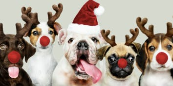 Santa's Puppy Workshop benefiting the Nashville Humane Association