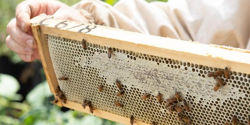 The Secret Life of Bees: Open Hive Experience