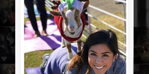 Christmas GOAT YOGA! Coffee, Cocoa, & Candy Canes!