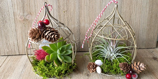 Make-n-Take: Succulent Ornament