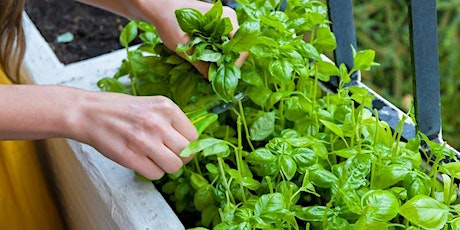 Edible Gardens for your Balcony tickets