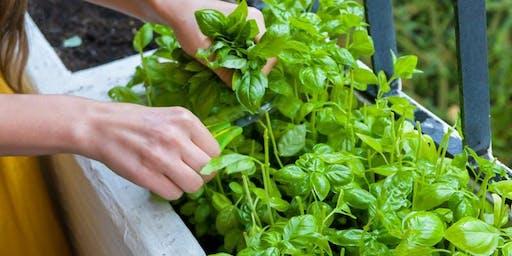 Edible Gardens for your Balcony