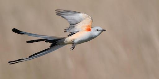 CRASH COURSE IN BIRD PHOTOGRAPHY