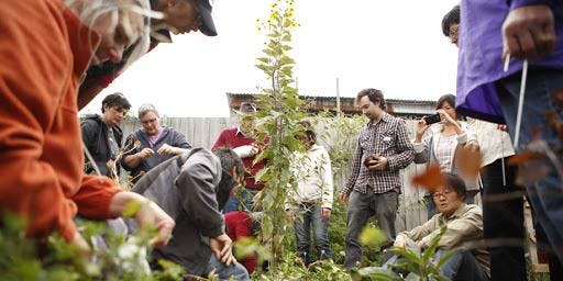Living Permaculture in Community