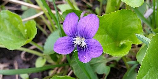 Spring Gardening Inspiration 2020