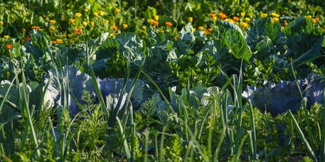 Permaculture. Two Day Course on 22 & 29 October 2020 tickets