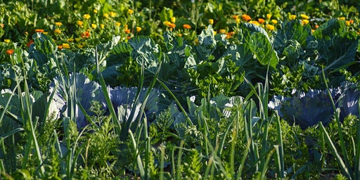 Permaculture. Two Day Course on 22 & 29 October 2020