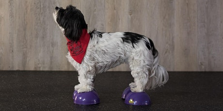 Canine Only Fitness Class (6-weeks) tickets