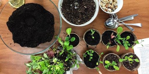 Growing Winter Veggies From Seed