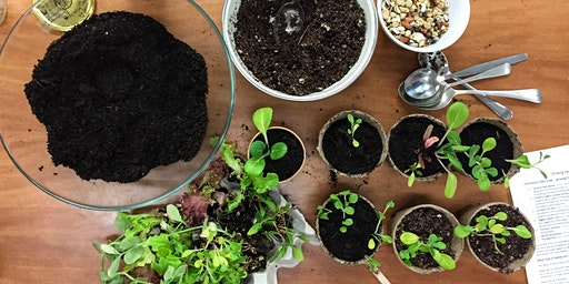 Growing Winter Veggies From Seed