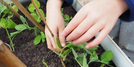 January Holiday Program: Mini-vegetable planting workshop - Taree tickets