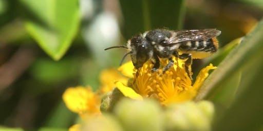 Bee Friendly Backyards