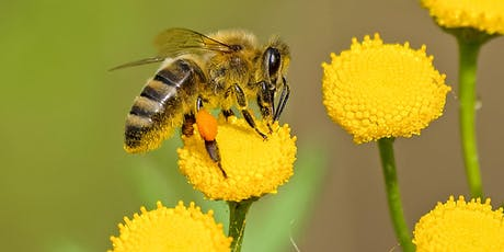 Seed Bombs for Bees - for Kids (Branxton) tickets