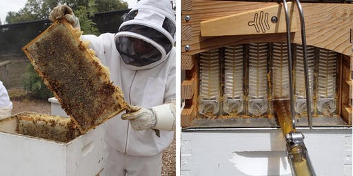 Bees: Summer Hands-on Beekeeping Course (16th February 2020)