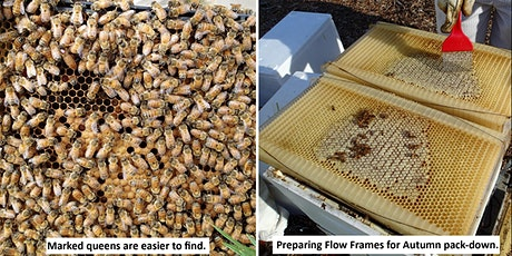 Bees: Autumn Hands-on Beekeeping Course (15th March 2020) tickets