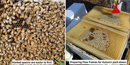 Bees: Autumn Hands-on Beekeeping Course (15th March 2020)