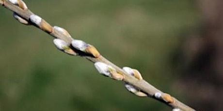 Wetlands Workshop: Winter Tree ID tickets