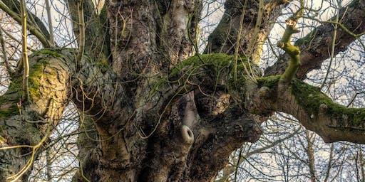 Winter Tree Identification at Tyne Riverside Country Park