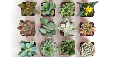 Succulent Gardens Crafternoon Tea Workshop with The Flower House tickets