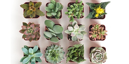 Succulent Gardens Crafternoon Tea Workshop with The Flower House